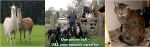 Animal Aunts the sitters for all your pets