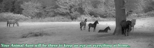 Your Horse sitter enhances security by being there
