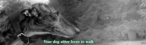 Your dog sitter will walk them as much as they want