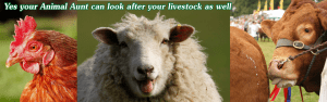 Your Animal Sitter can care for your smallholding
