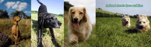 Animal Aunts love walkies