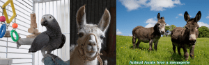 Animal Aunts - caring for all your animals