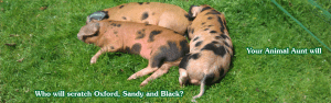 Pet and pig sitters!
