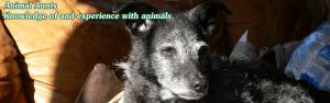 Animal Aunts - the expert pet sitters