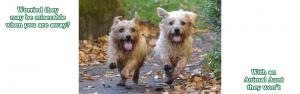 Dog sitters love their walks
