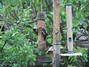 Wild Bird Cam