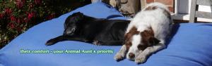 dog sitter's priority