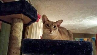 cat - sitter