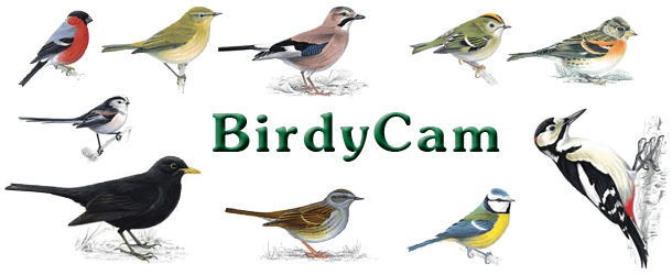 birdycam-page-picture