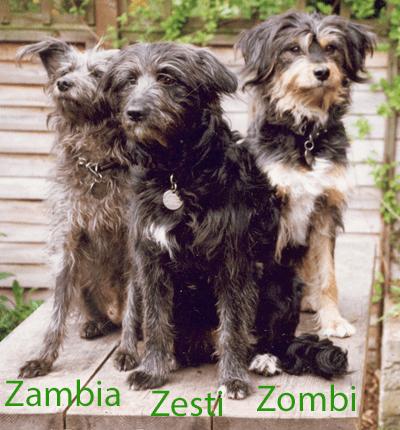 Zambia Zesti Zombi