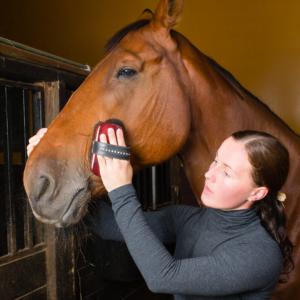 Horse sitter