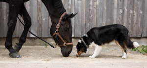 Animal Aunts can take care of horses and other animals
