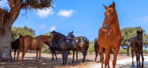 Animal Aunts to take care of lots of horses
