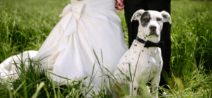 Dog with bride & groom