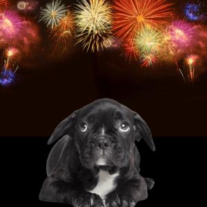 Dog scared of fireworks