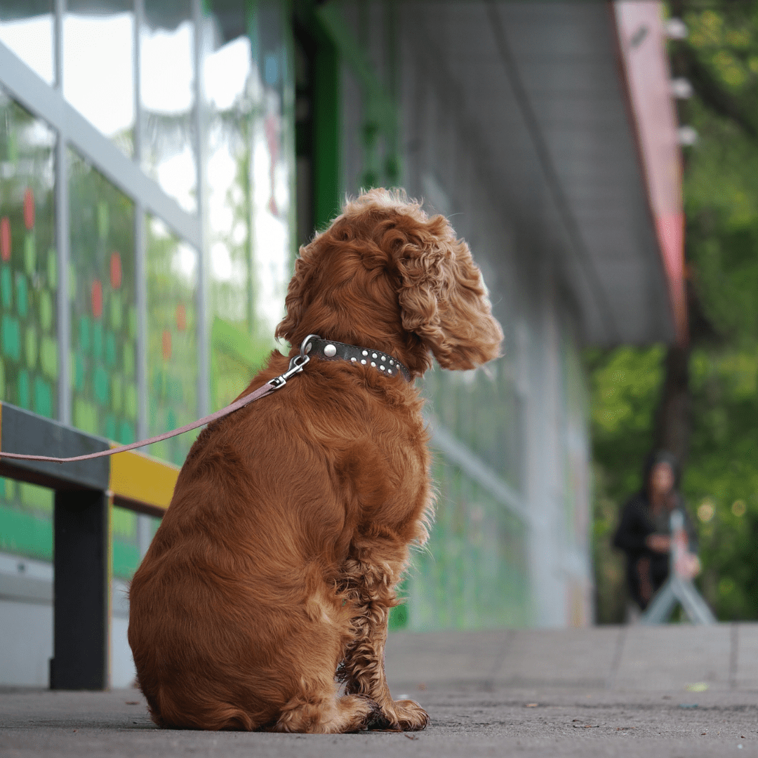 Stop Dog Theft